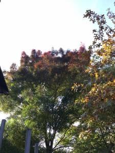 autumnal-061