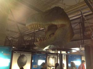 rex-head