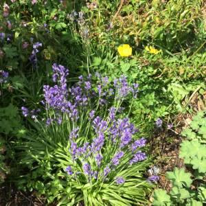 pergola-and-hill-garden-200