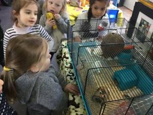 hamster-010