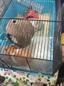 hamster-027